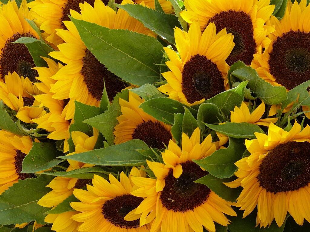 Beautiful Flowers In Pescia