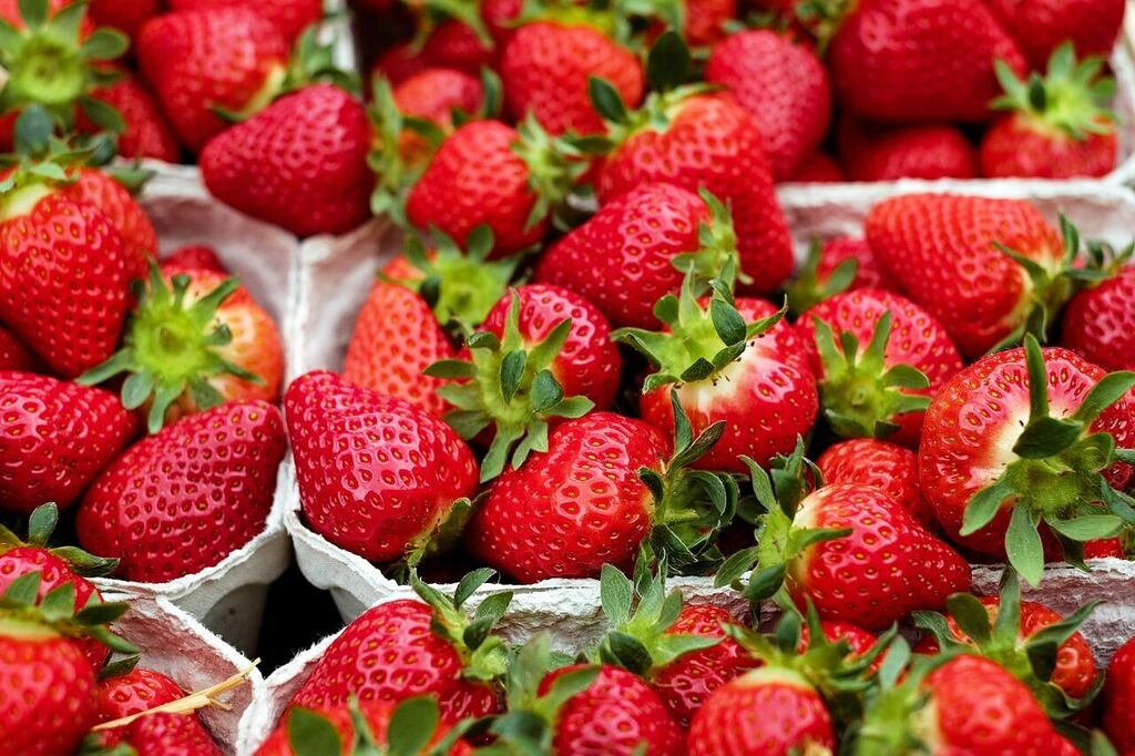 Strawberry Festival 2020 Dates.A Must See Foodie Festival For Those Visiting Pisa