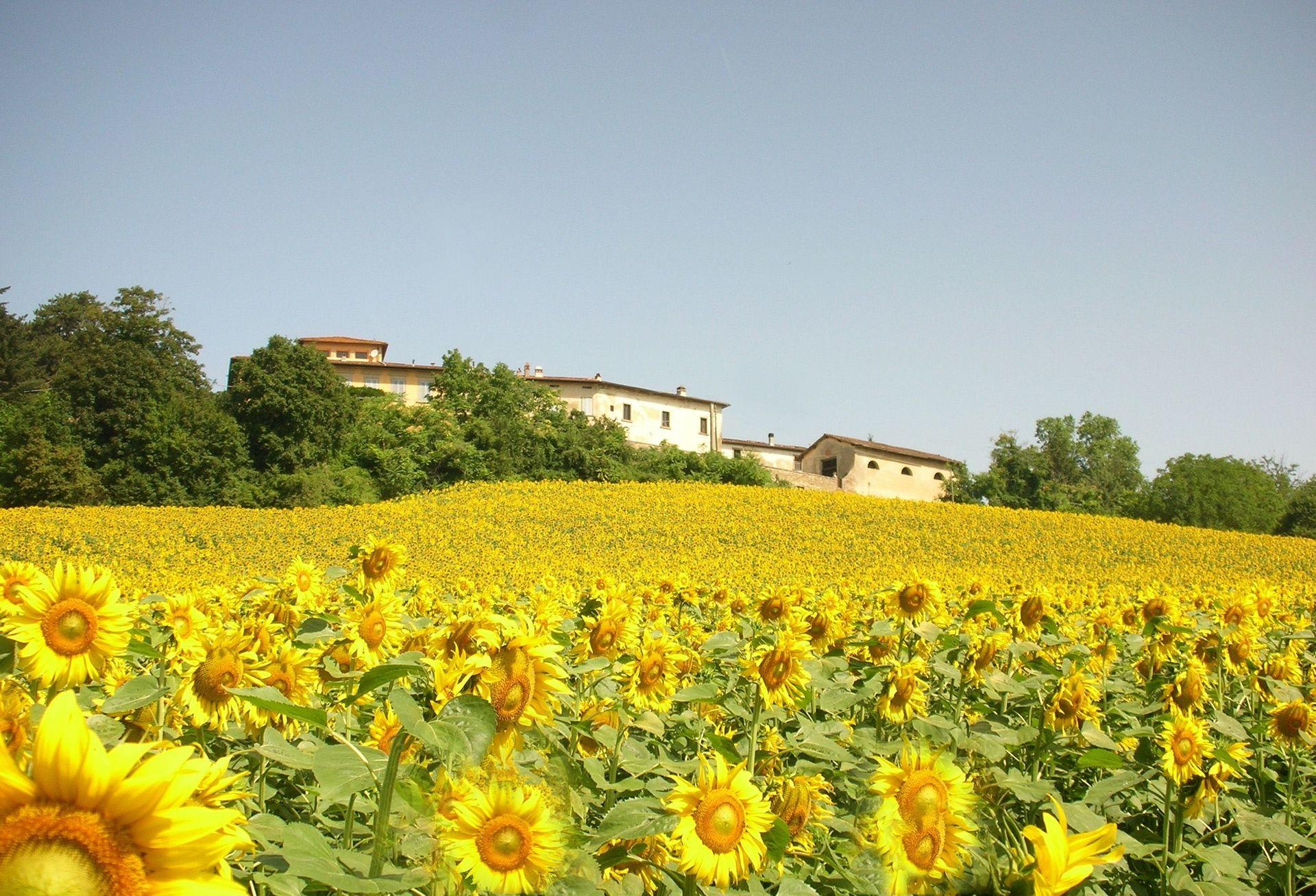 Villa di collina casa vacanze con 14 posti letto in 7 for Piani casa ranch in collina